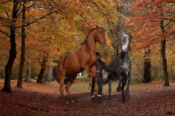 training horses without compulsion