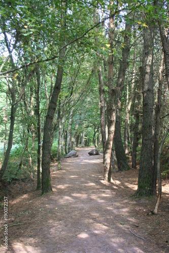 Fotobehang Weg in bos Fontainte de Barenton Broceliande Bretagne