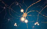 Neuronen 3D Illustration - 190074089