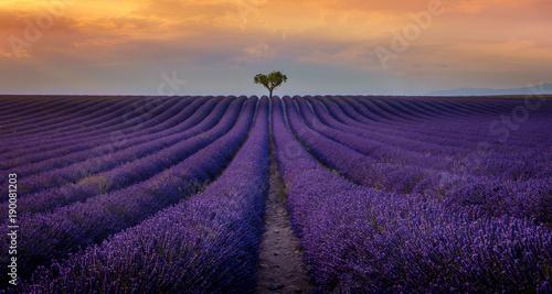 Foto op Canvas Lavendel Valensole - Champs de lavande