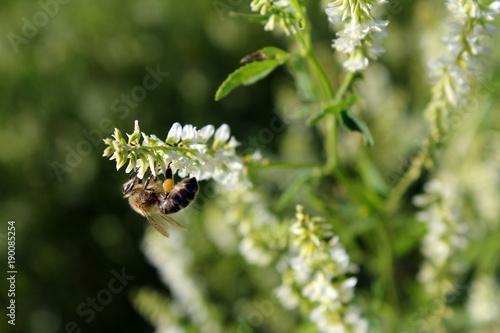 Aluminium Bee Bee on the flower