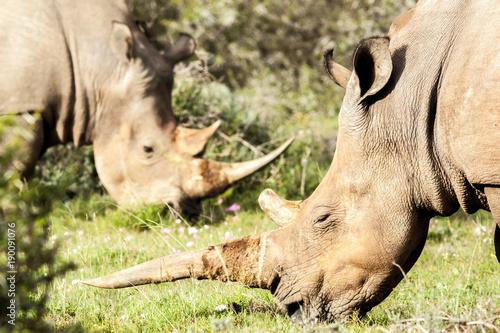 Aluminium Neushoorn Rhino Horns
