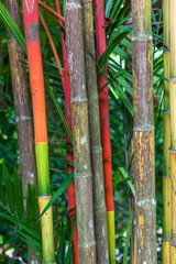 Bamboo Stems in Singapore