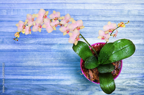 blooming-orchid-flowers-pink-for-decoration-in-various-designs