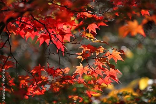 Poster Kyoto Kyoto autumn foliage
