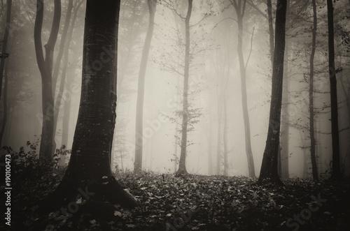 mroczne-tajemnicze-mgliste-lasy