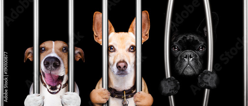 Tuinposter Crazy dog dogs behind bars in jail prison