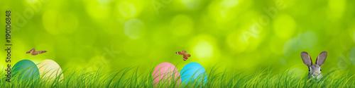 Deurstickers Gras Ostern Frühling Osterhase Eier