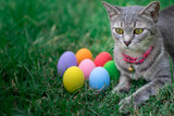 The cat plays with the colorful easter eggs with green grass background in front yard