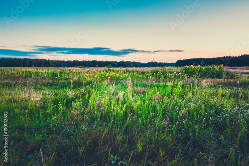 Fotobehang Lente Meadow landscape in morning. Scenic nature