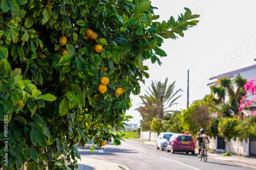 Fotobehang Cyprus Lemon tree on the streets of Larnaca