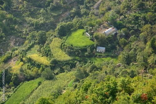 Foto op Canvas Pistache Terassenbau mit Gehöft und saftigen Feldern