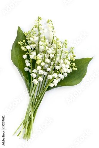 Fotobehang Lelietjes van dalen Lily of the Valley Isolated on White
