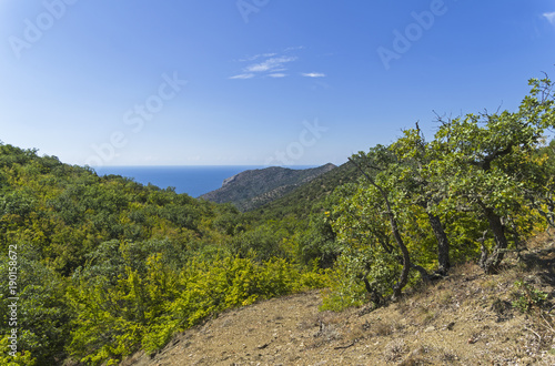 Foto op Canvas Herfst Crimea. Forest on the slopes of the coastal mountains.