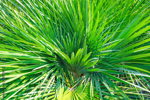 Papiers peints Vert the green branches of the palm trees Sunny day