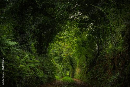 Aluminium Betoverde Bos Verzauberter Pfad im Märchenwald (Irland)