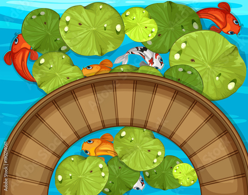 Poster Lime groen Top view of fish and waterlily in the pond
