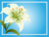 Border template with white lily - 190214222