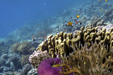 Tropical fish and corals, showing different colorful fishes swimming - 190216807