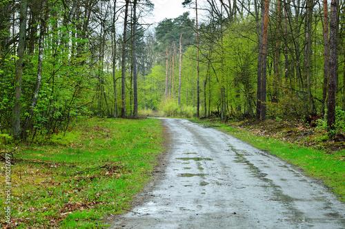 Fotobehang Weg in bos Błotnista leśna droga skręca między drzewa w lesie.