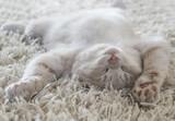 Cute cat lying on the back like on a carpet - 190227230