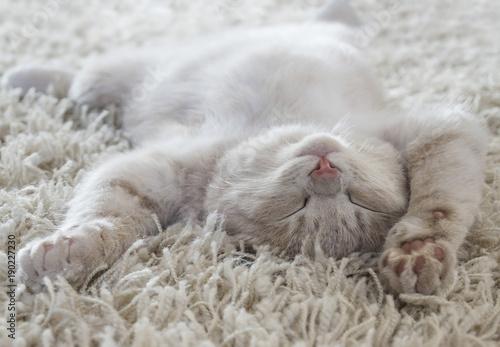 Foto Murales Cute cat lying on the back like on a carpet