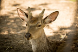 Portrait of a deer in the zoo - 190231408