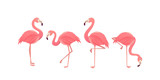 Fototapety Flamingo bird illustration design on background
