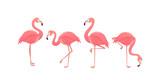 Flamingo bird illustration design on background - 190234608