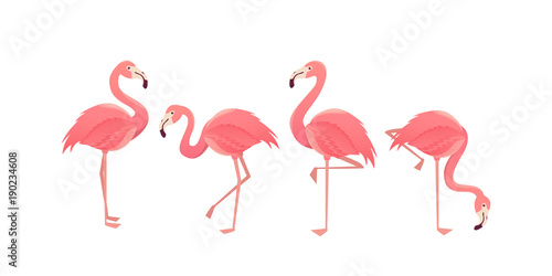 Flamingo bird illustration design on background - 190234608