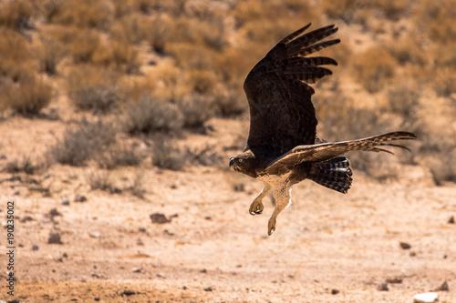 Aluminium Eagle Martial Eagle in flight