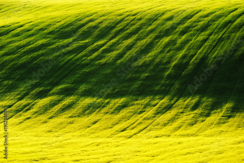 Plexiglas Geel spring field. picturesque hilly field. agricultural field in spring