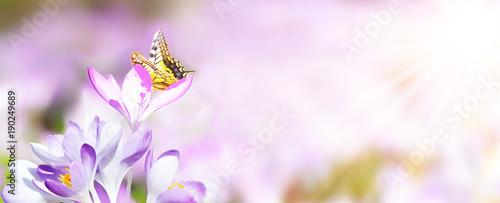 Aluminium Vlinder Wiese mit zarten Blumen im Frühling