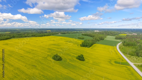 Foto op Canvas Pistache Yellow meadows with trees and blue sky in summer season, aerial view
