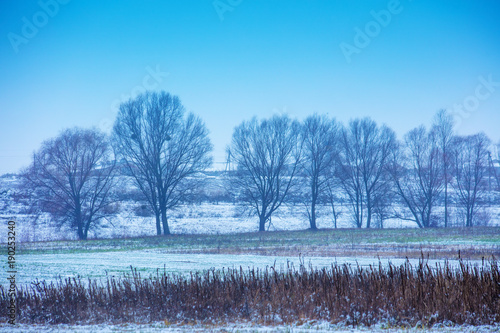 Foto op Canvas Blauw Rural winter landscape. Field with a row of trees. The field covered with snow. Beautiful winter nature