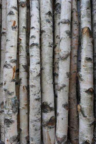 Birkenstämme für Brennholz, Bauholz oder Dekoration.  Betula Papyrifera. Natürlicher hölzerner Hintergrund - 190259824