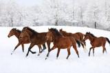 Herd of horses in a deep winter - 190260093