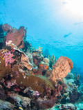 Beautiful coral reef at Bunaken