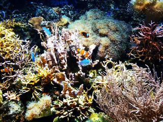 Coral reef closeup