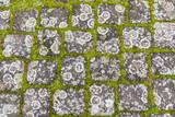 Flechten auf Pflastersteinen - 190296875