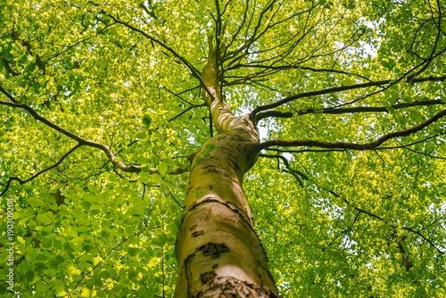 Foto op Plexiglas Landschappen yeşil bi agaç