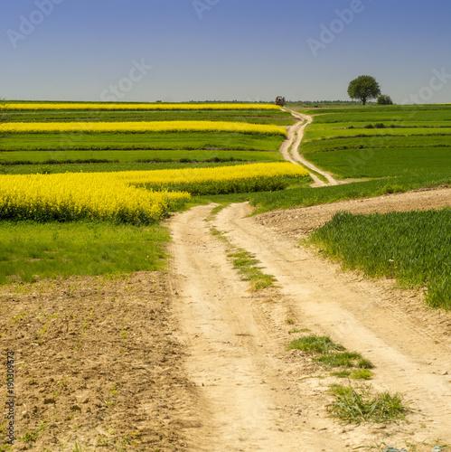Foto op Canvas Meloen Rural landscape in Roztocze, Poland