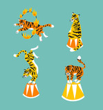 Vector set of cute trained tigers. Circus animal  show. Isolated design elements. - 190338874