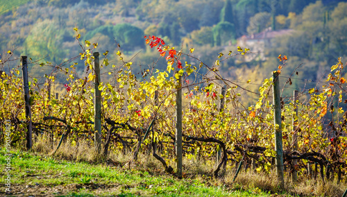 Fotobehang Wijngaard autumn vineyard with grapes