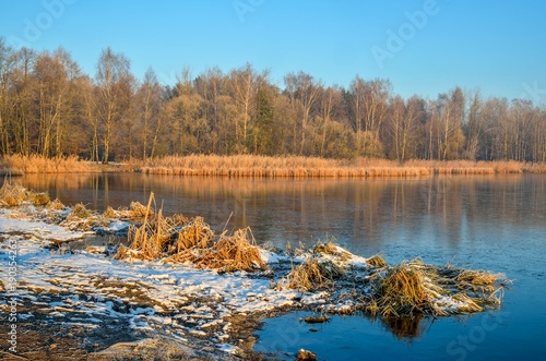 Foto Murales Winter morning landscape. Plants and trees by the lake.