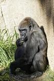 zoo  - 190355825