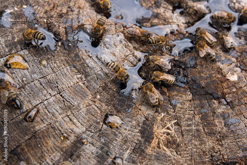 Aluminium Bee Bees and wasp swarming on honey drops on vintage wooden background..