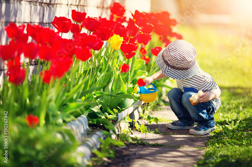 Little child walking near tulips on the flower bed in beautiful spring day - 190367442