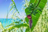 banana flower in shade - 190376005