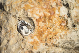 Rock texture background - 190376039